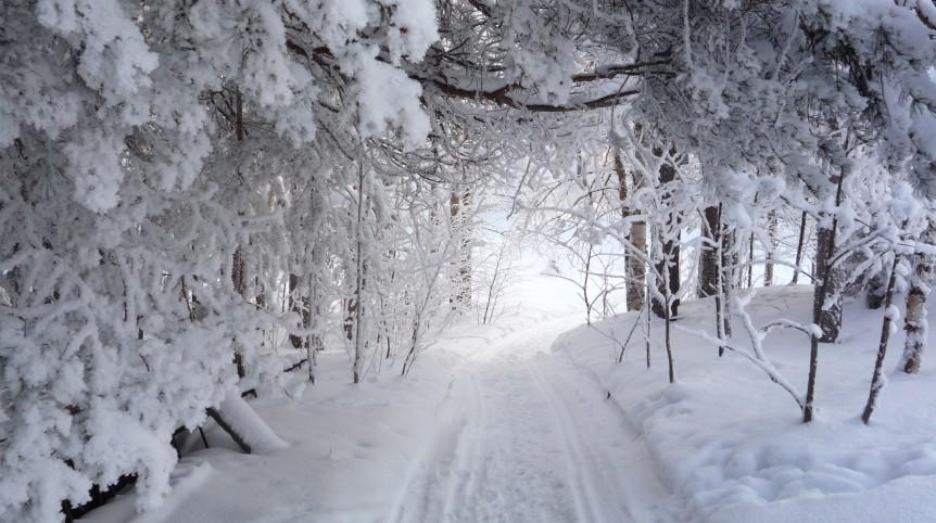 neige-sous-bois